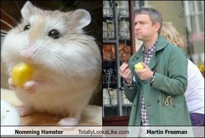 actors,eating,hamster,Martin Freeman,noms