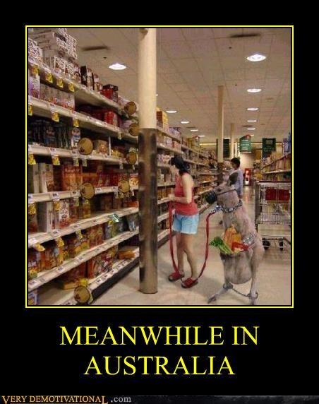 animals austrailia hilarious kangaroo shopping - 5080835840