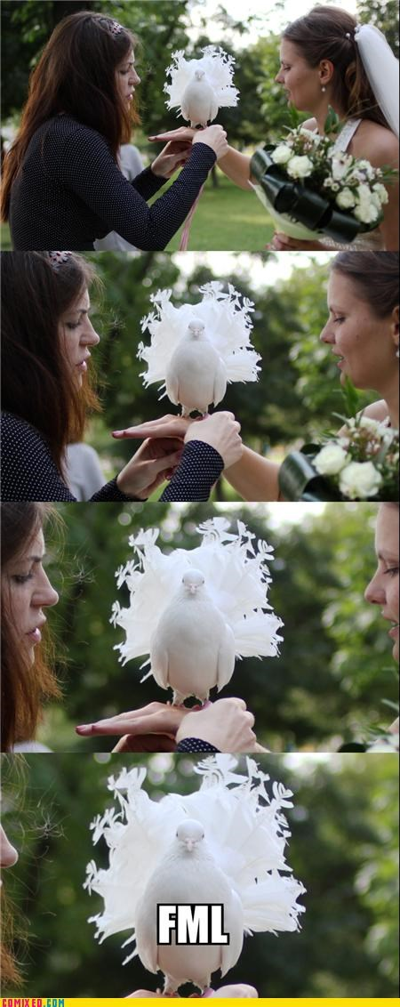 animals bird bride dove marriage ring wedding - 5081096448