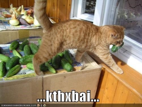 caption captioned cat cucumber kthxbai leaving noms stealing tabby thief - 5081129728