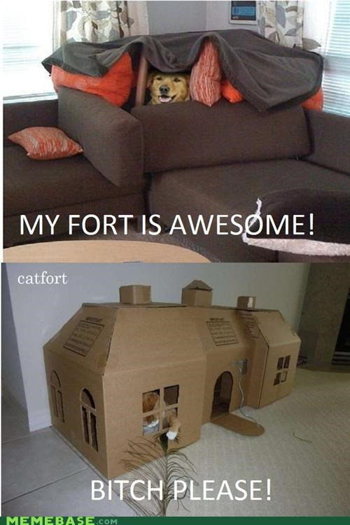 animemes awesome cat Dog Fort forts Memes please - 5081167616