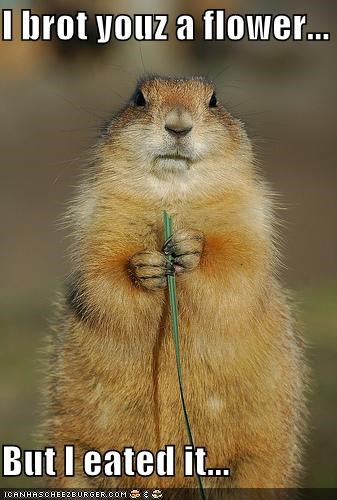 eated,flowers,prairie dog,rodents