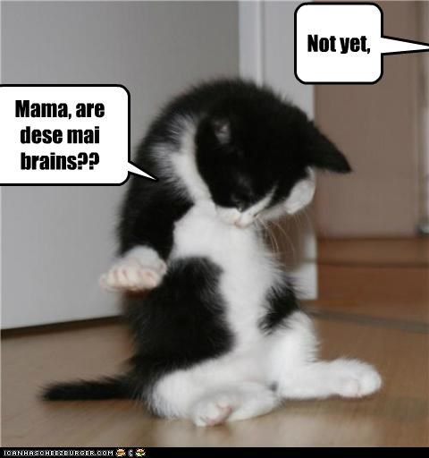 brains,caption,captioned,cat,Cats,Hall of Fame,innuendo,kitten,looking,mama,mom,mother,not,not yet,question,yet
