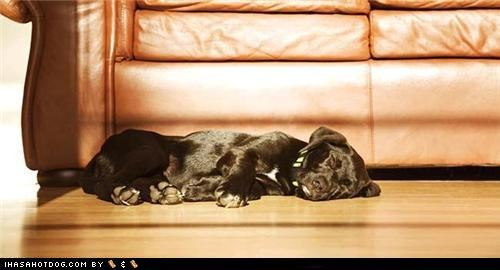asleep Black Lab cyoot puppeh ob teh day floor labrador retriever nap time sleeping sun beams sunshine - 5081708288