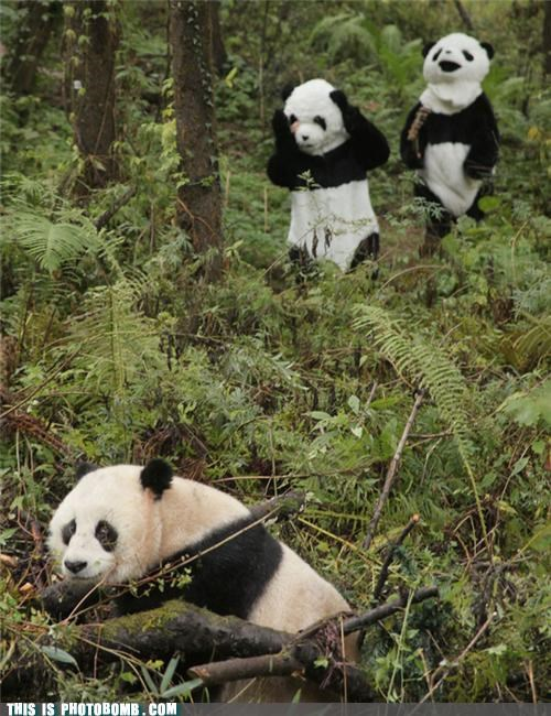costume,hipster,panda,wildlife,woods