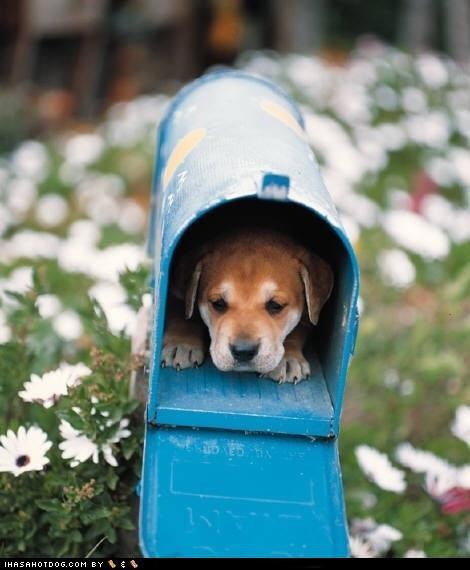 adorbz,awww,cyoot puppeh ob teh day,mail,mailbox,puppy,special delivery,whatbreed