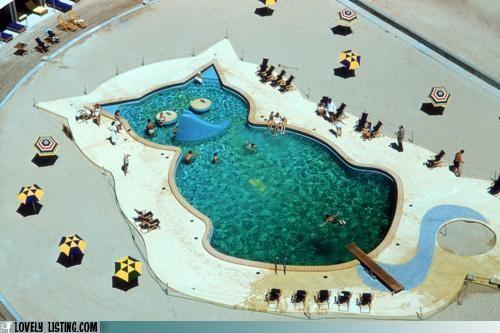 cat,pool