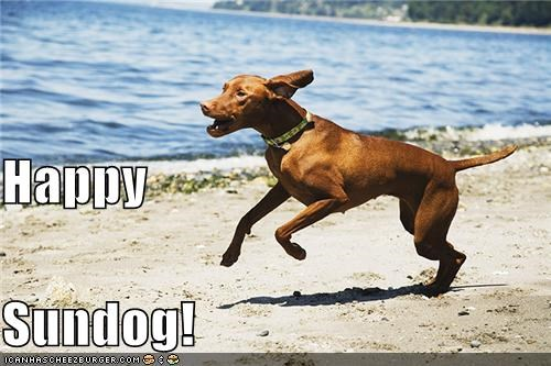 beach happy dog happy sundog outdoors running sunny day whatbreed - 5082132736