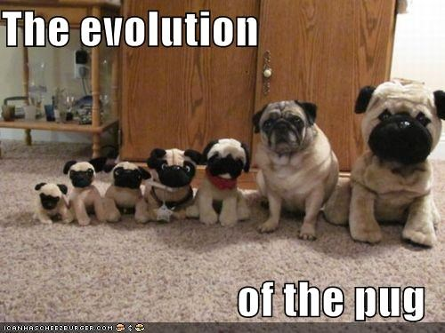 Doppelgänger,evolution,plush toy,pug,stuffed animal,toys