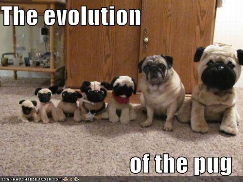 Doppelgänger evolution plush toy pug stuffed animal toys - 5082445056