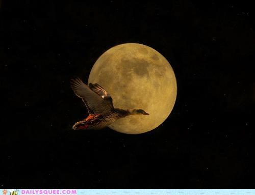 acting like animals angle duck flying illusion lyrics made up moon parody quack quacking singing song - 5082589440