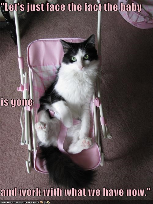 baby,caption,captioned,cat,face,fact,gone,optimism,realism,stroller,with,work