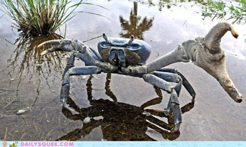 acting like animals crab do want offer quote - 5082618624