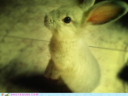 asking baby Bunday bunny eager happy happy bunday question rabbit wondering