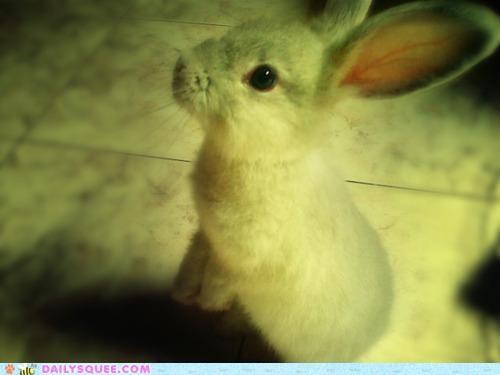 asking baby Bunday bunny eager happy happy bunday question rabbit - 5082697984