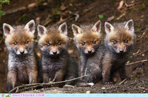 Babies,baby,eyes,facade,fox,foxes,innocent,kit,kits,rascals,row,Staring