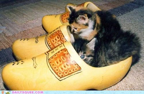 cat Cats clog clogs double meaning internet kitten pun - 5082716672