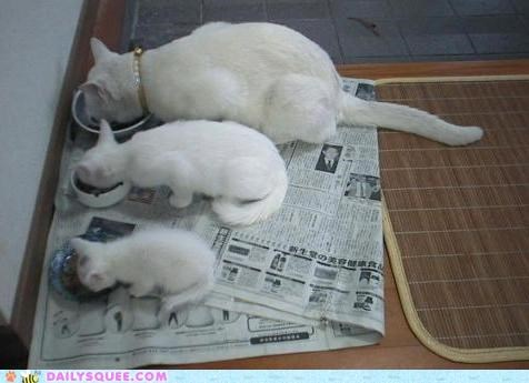 cat Cats child generation generations grandparent Hall of Fame parent three