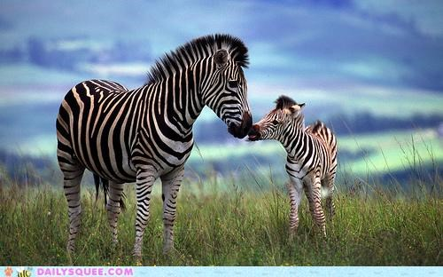 baby decoding decrypting gene genome inimitable innate parent squee zebra zebras - 5082738944