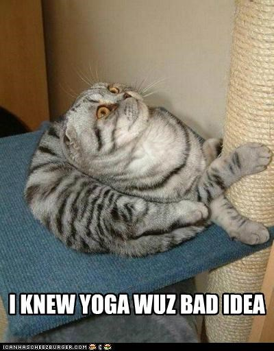 animals,awkward position,bad idea,Cats,I Can Has Cheezburger,injury,yoga