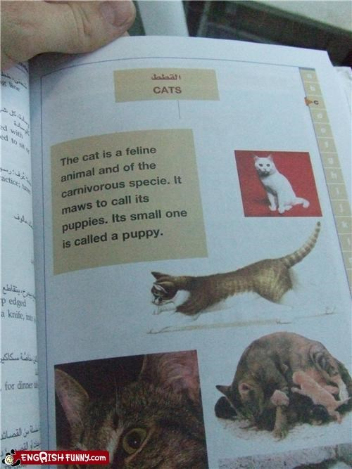 book cat children dictionary Hall of Fame nice try pets - 5083379968
