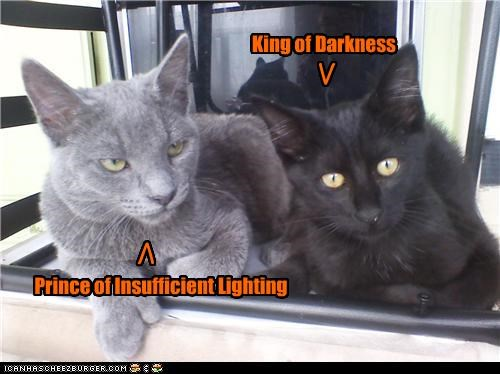 basement cat caption captioned cat Cats darkness insufficient king lighting moral gray area cat prince - 5083395328