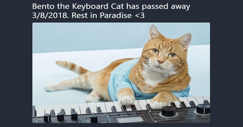RIP Keyboard Cat