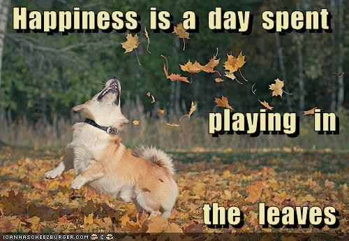 autumn corgi happy dog having fun jumping leaves playing - 5085122560