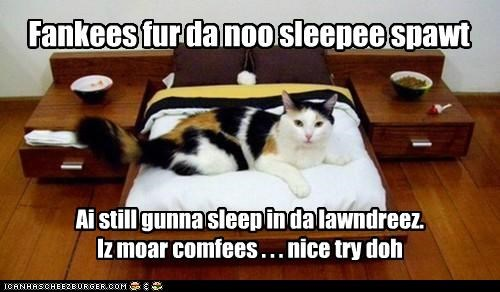 Fankees fur da noo sleepee spawt Ai still gunna sleep in da lawndreez. Iz moar comfees . . . nice try doh