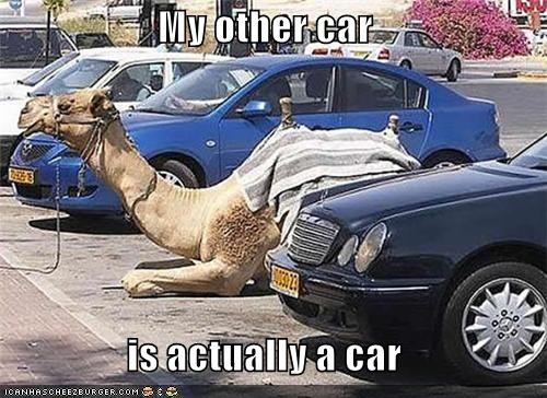 animals,bumper stickers,camels,cars,wtf