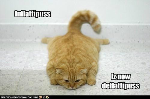 Inflattipuss Iz now deflattipuss