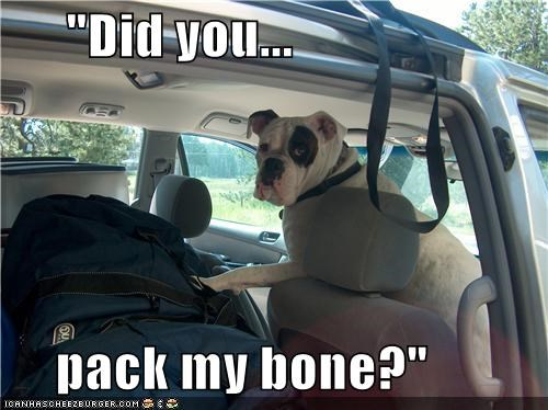bone,boxer,car,luggage,packing,trip,vacation