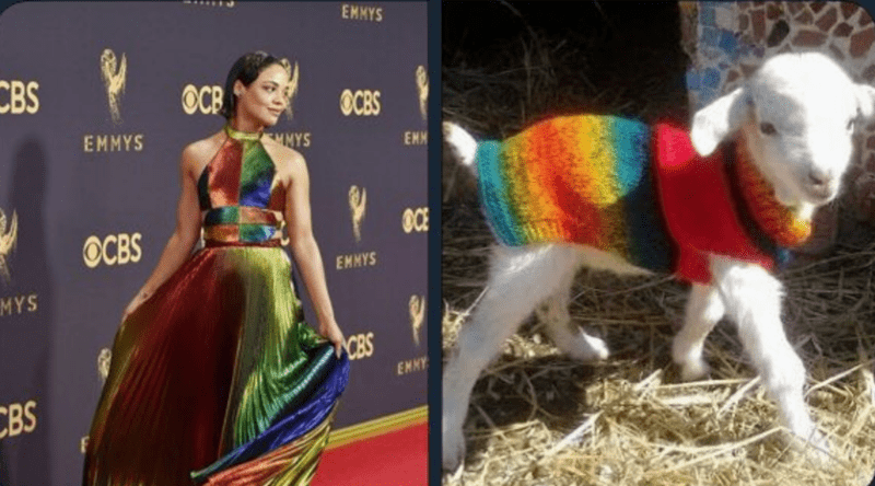 a funny account compares actress to cute and funny goats