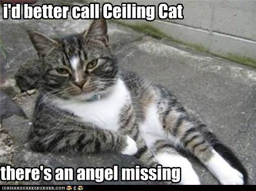 i'd better call Ceiling Cat there's an angel missing