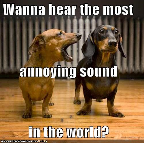 annoying sound,best of the week,dachshund,friends,most annoying sound in the world,talking,yelling