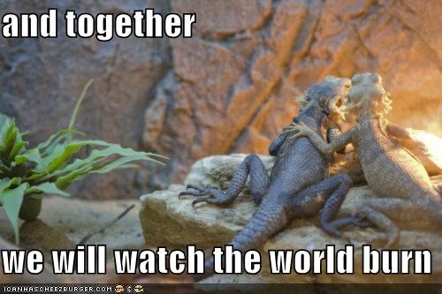 animals,bearded dragons,I Can Has Cheezburger,lizards,love,together,watch the world burn