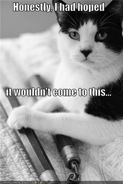 caption captioned cat come honestly hoped nunchucks this wouldnt - 5089013760