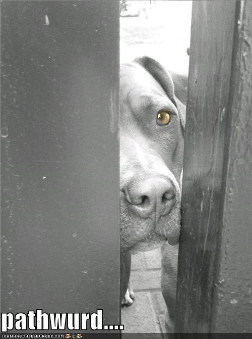 club password pitbull secret - 5089082112