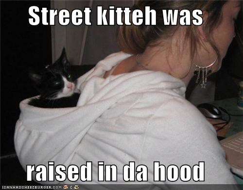 animals,Cats,hood,I Can Has Cheezburger,puns,sweatshirt,the street,urban