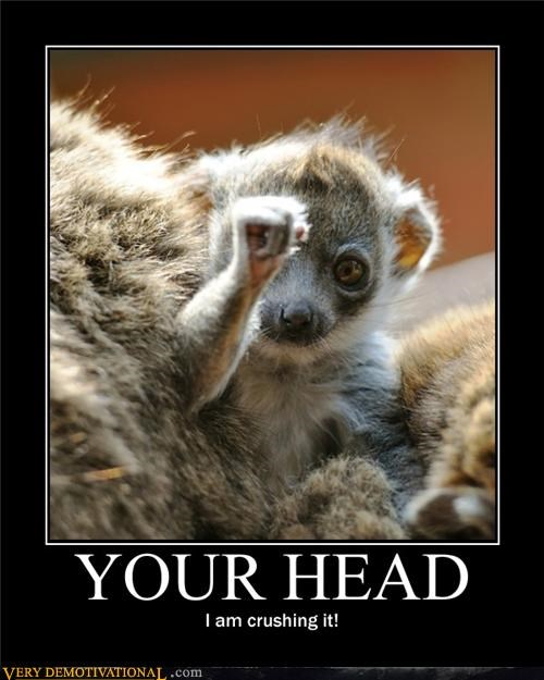 animals crushed head hilarious wtf - 5089270016