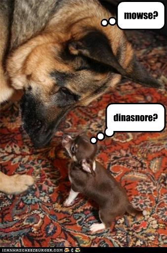 chihuahua dinosaur friends german shepherd mouse puppy what is this
