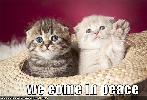 Aliens animals Cats cute I Can Has Cheezburger peace we come in peace - 5089483776