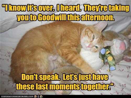 caption,captioned,cat,do not want,goodwill,heard,last,moments,news,over,Sad,silence,stuffed animal,tabby,taking,together