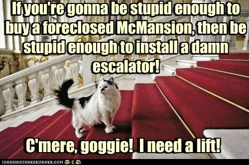 C'mere, goggie! I need a lift! If you're gonna be stupid enough to buy a foreclosed McMansion, then be stupid enough to install a damn escalator! C'mere, goggie! I need a lift! If you're gonna be stupid enough to buy a foreclosed McMansion, then be stupid enough to install a damn escalator!