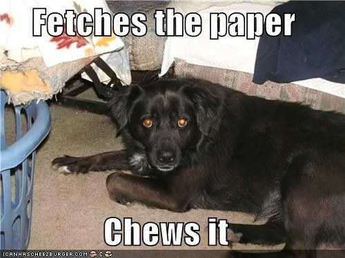 fetch,newspaper,paper,scumbag dog,whatbreed