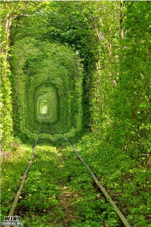abandoned,Hall of Fame,mother nature ftw,train,trees,tunnel,urban decay