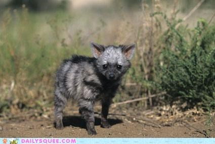 aardwolf aardwolves baby contest cub puppy squee spree winner