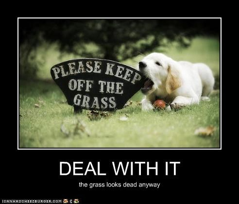 DEAL WITH IT the grass looks dead anyway