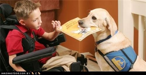 book child golden retriever help service and assistance service and assistance dogs service dogs Story Time