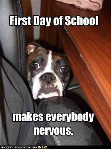 back to school,boxer,nervous,scared,school